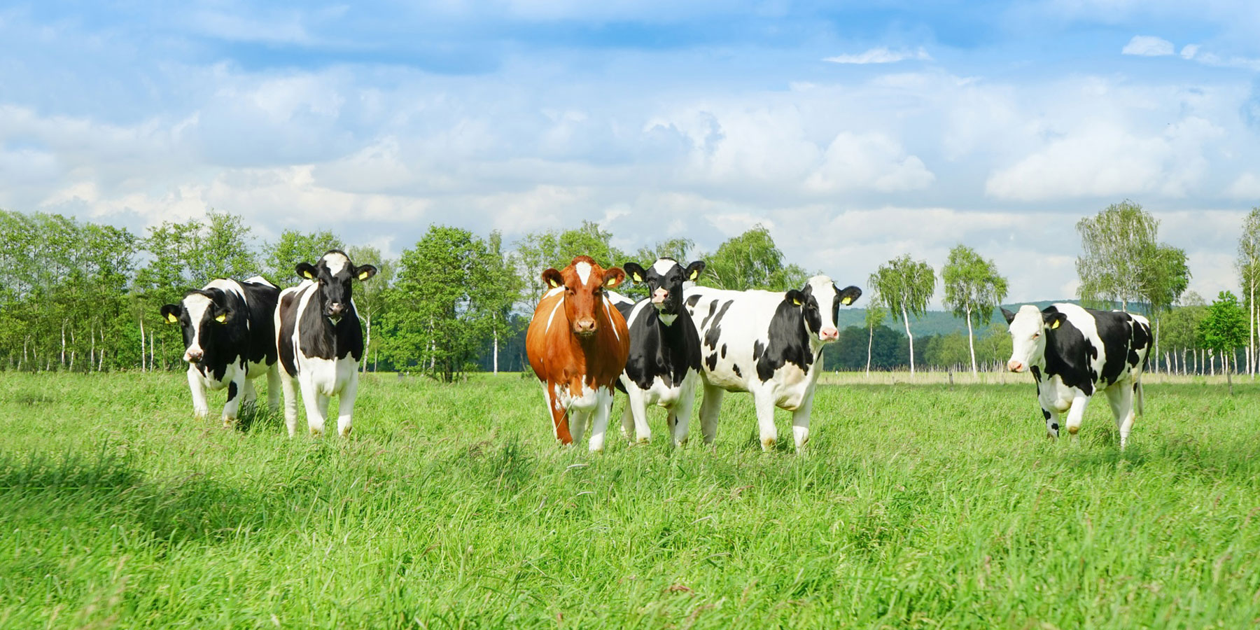 Tierarztpraxis Ehrenbrink Distanzbetäubung