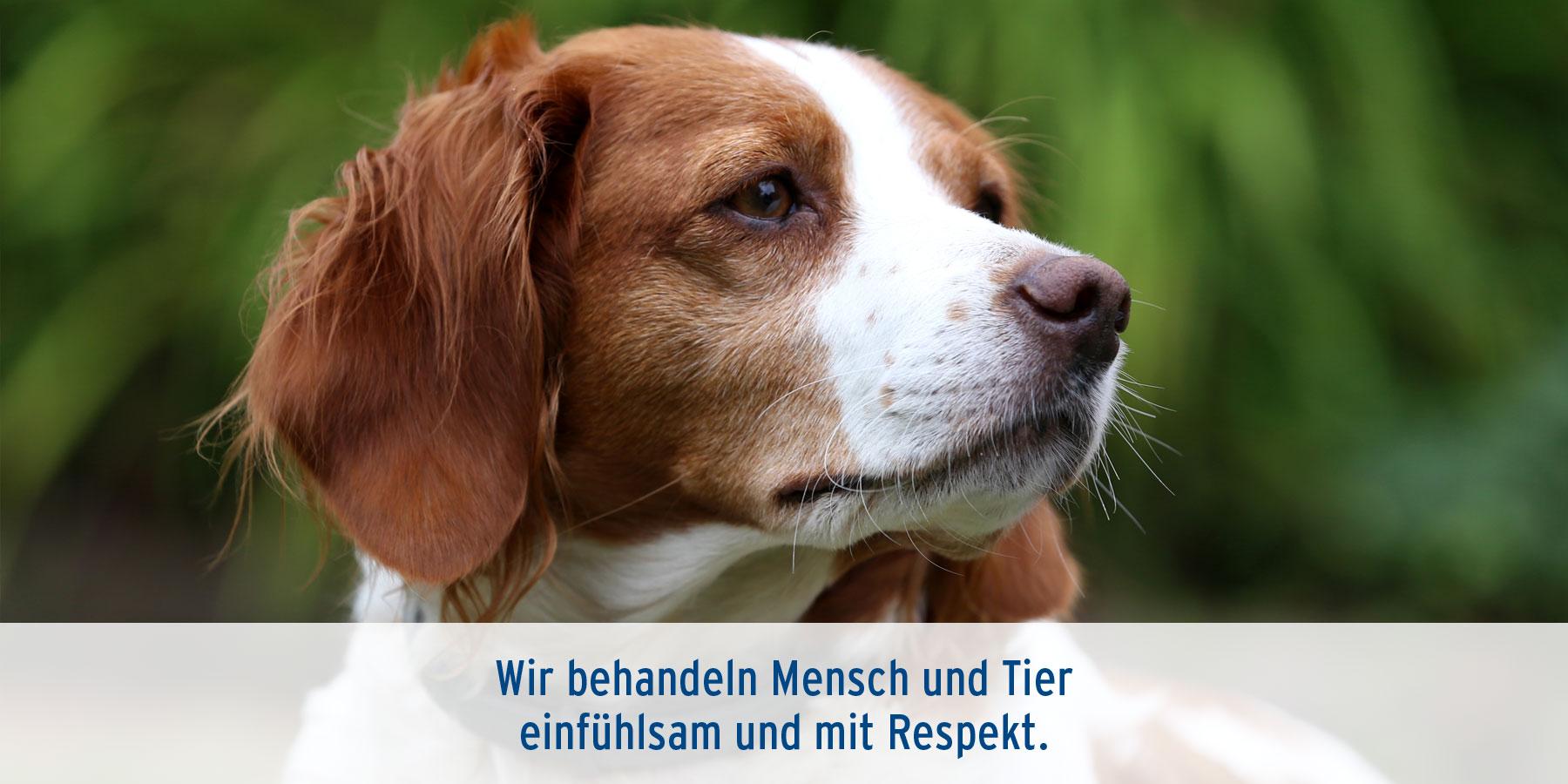 Tierarztpraxis Ehrenbrink