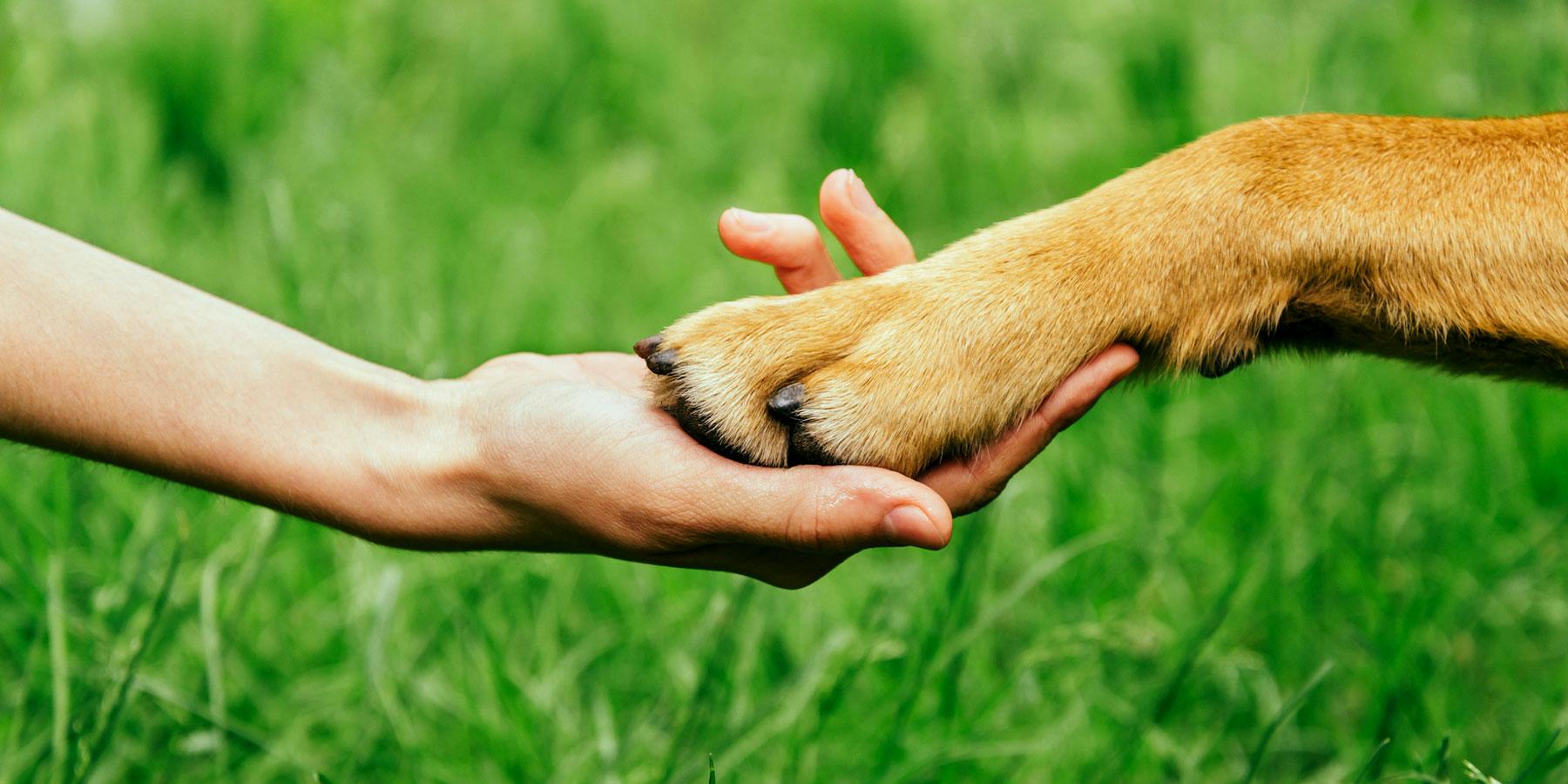 Philosophie Tierarztpraxis Ehrenbrink