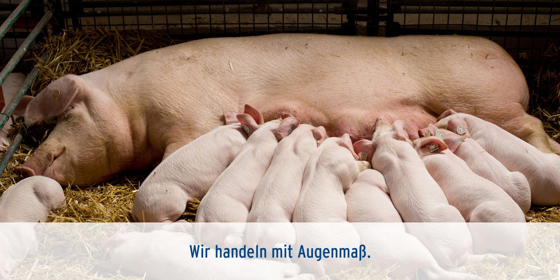 Tierarztpraxis Ehrenbrink Schwein