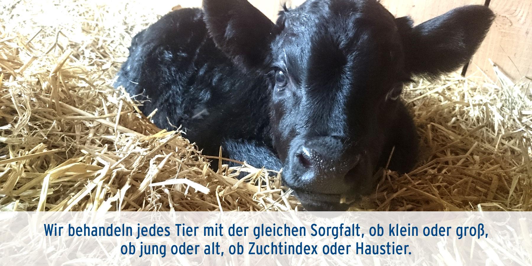 Gynäkologie Tierarztpraxis Ehrenbrink