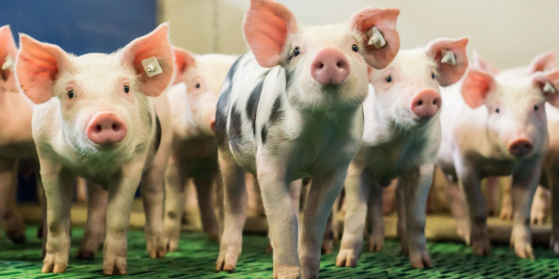 Infektionsmanagement Tierarztpraxis Ehrenbrink
