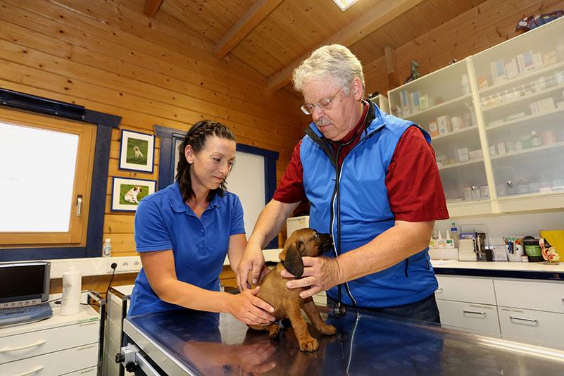 Ambulante Versorgung einer Hundes