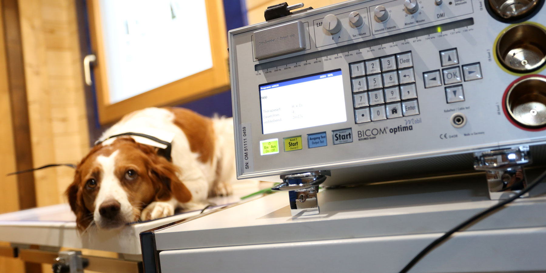 Bioresonanz Tierarztpraxis Ehrenbrink