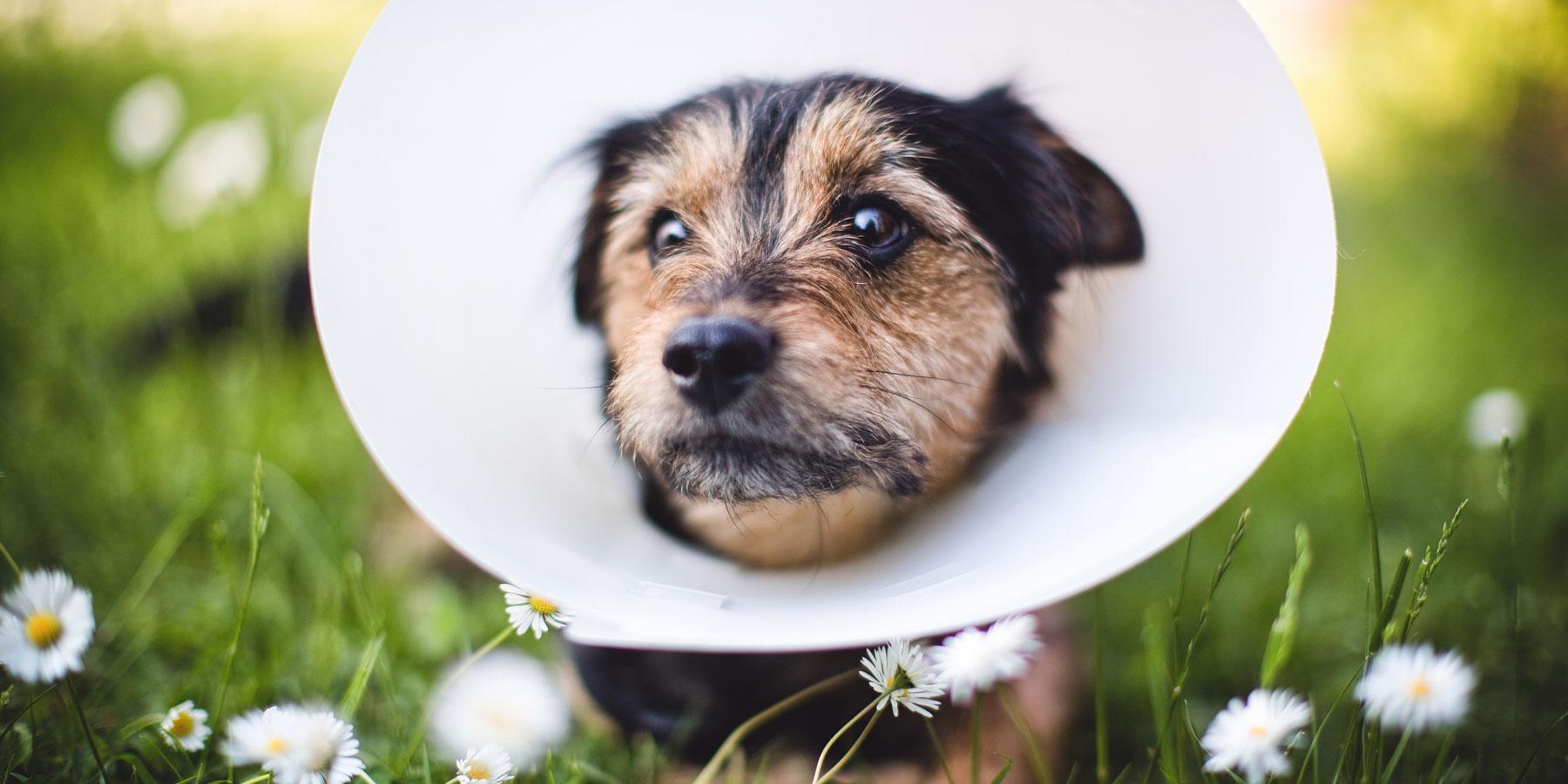 Chirurgie Tierarztpraxis Ehrenbrink