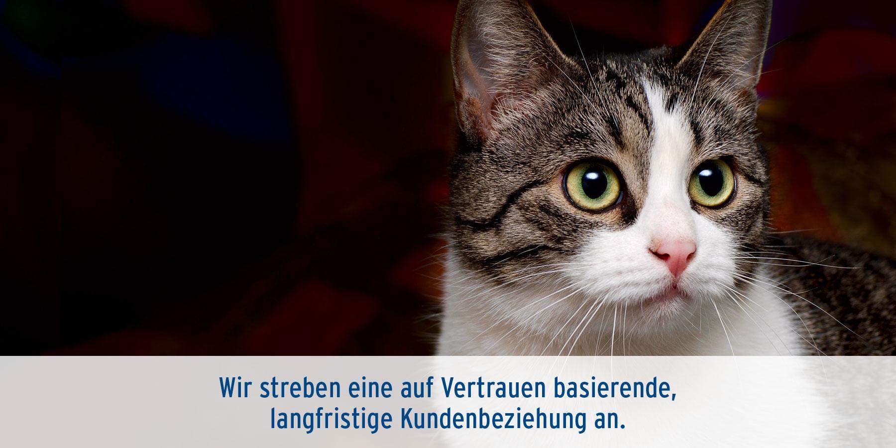 Dermatologie Tierarztpraxis Ehrenbrink