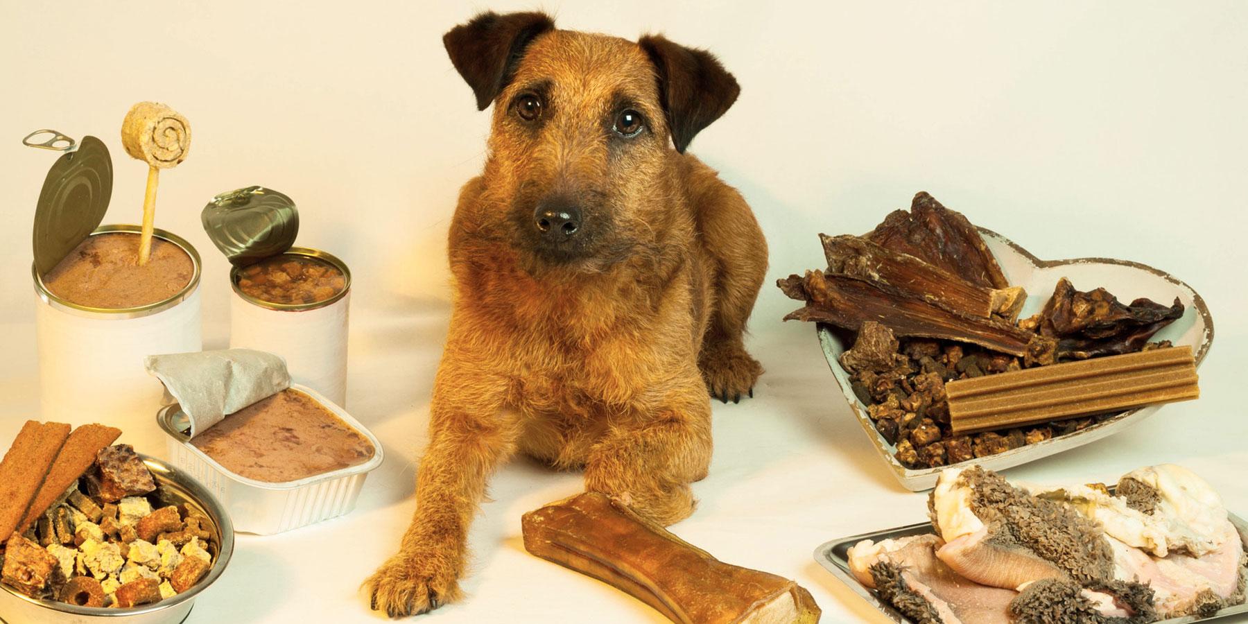 Ernährungsberatung Tierarztpraxis Ehrenbrink