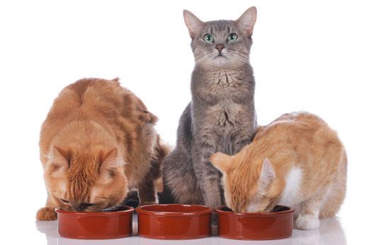 Ernährungsberatung für Katzen