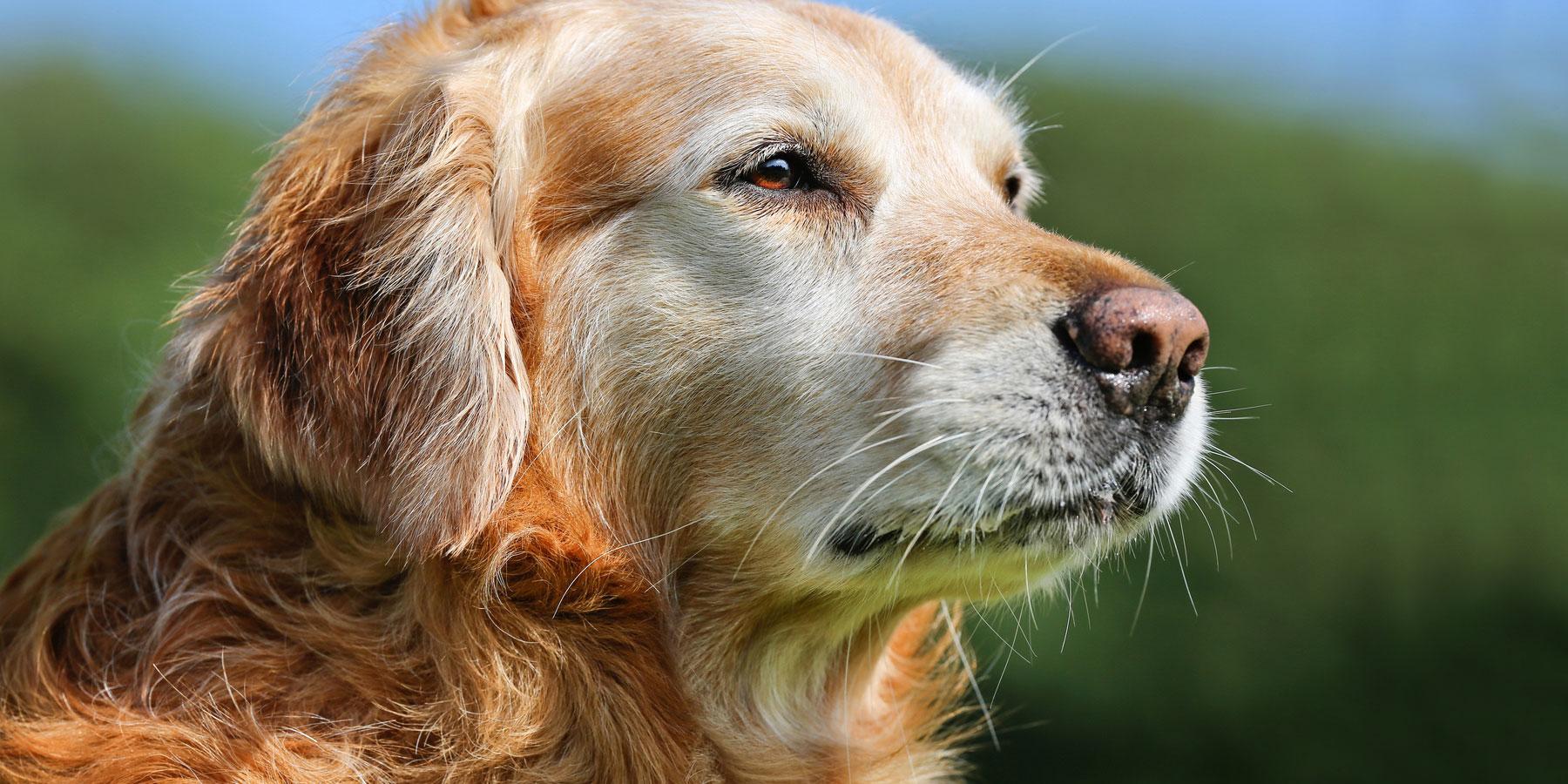 Geriatrie Tierarztpraxis Ehrenbrink