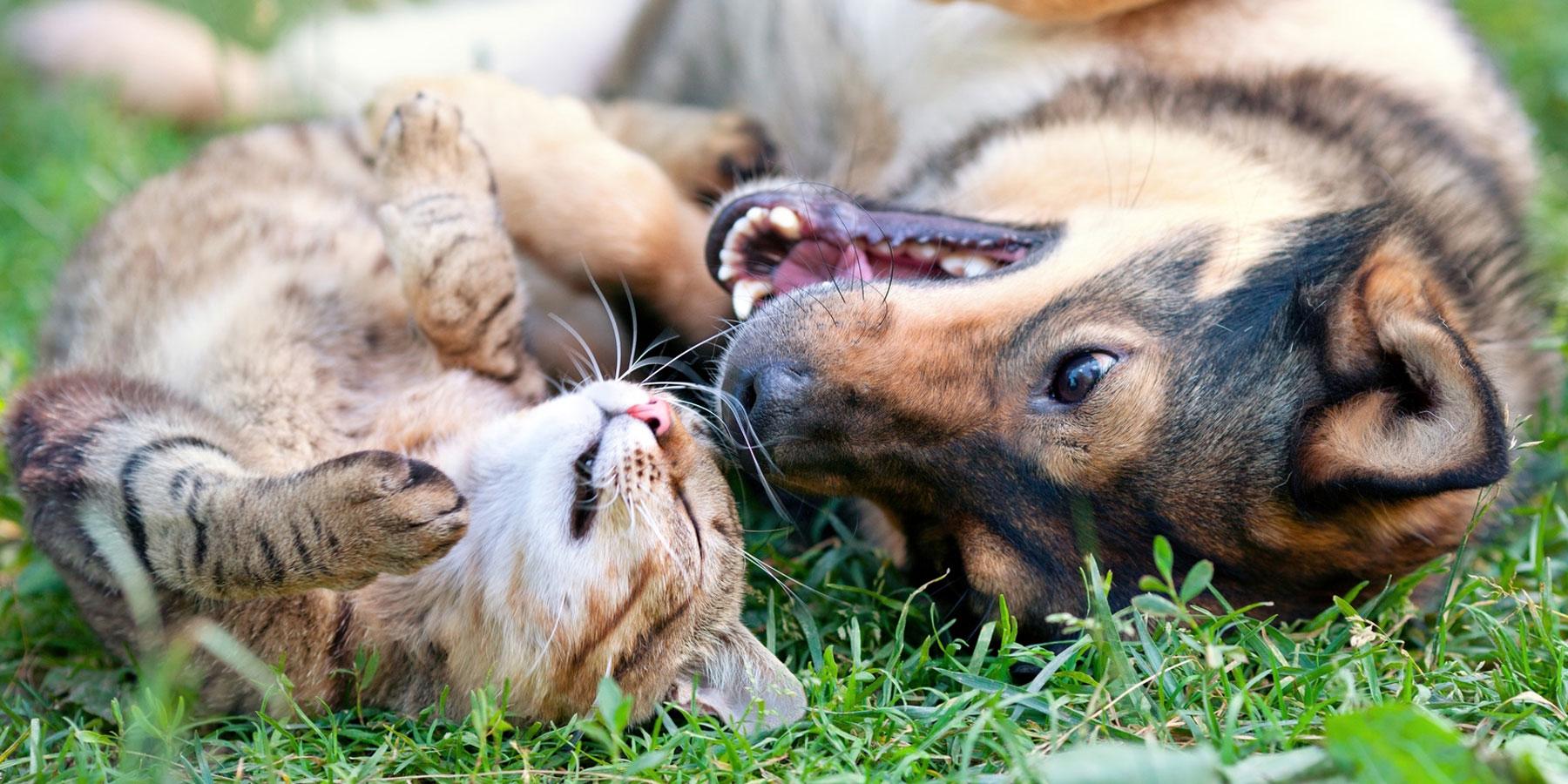 Impfungen Tierarztpraxis Ehrenbrink