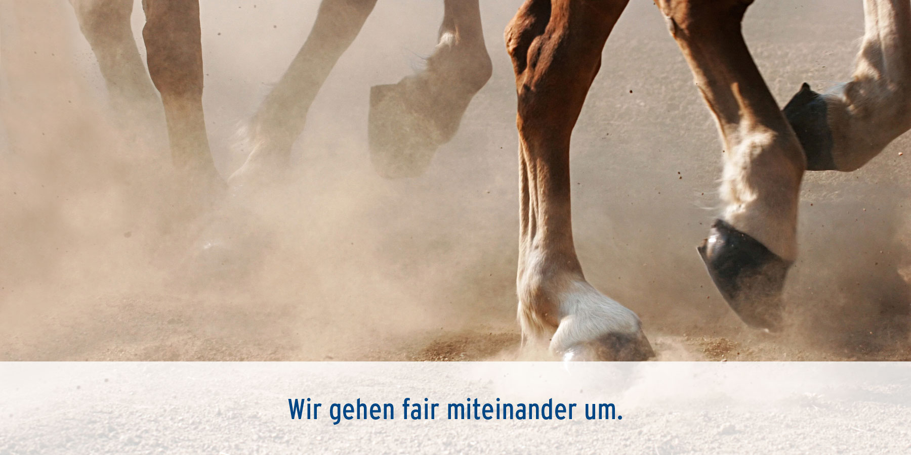 Lahmheitsdiagnostik Tierarztpraxis Ehrenbrink
