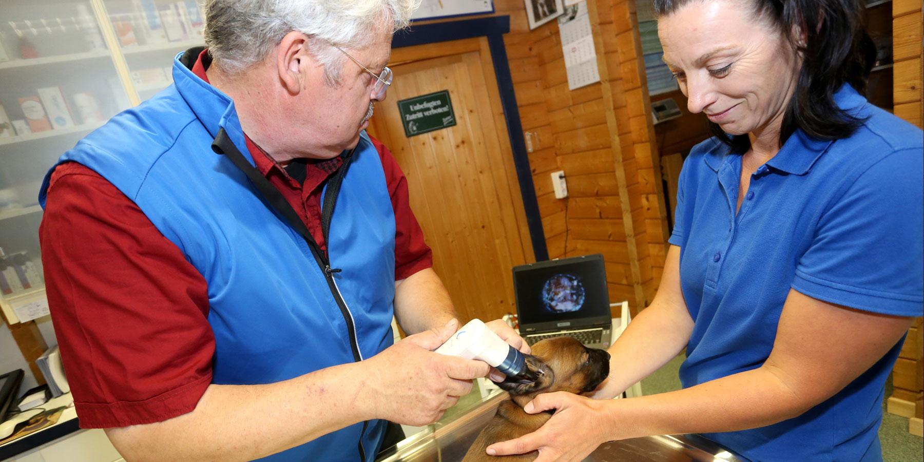 Video-Diagnostik Tierarztpraxis Ehrenbrink