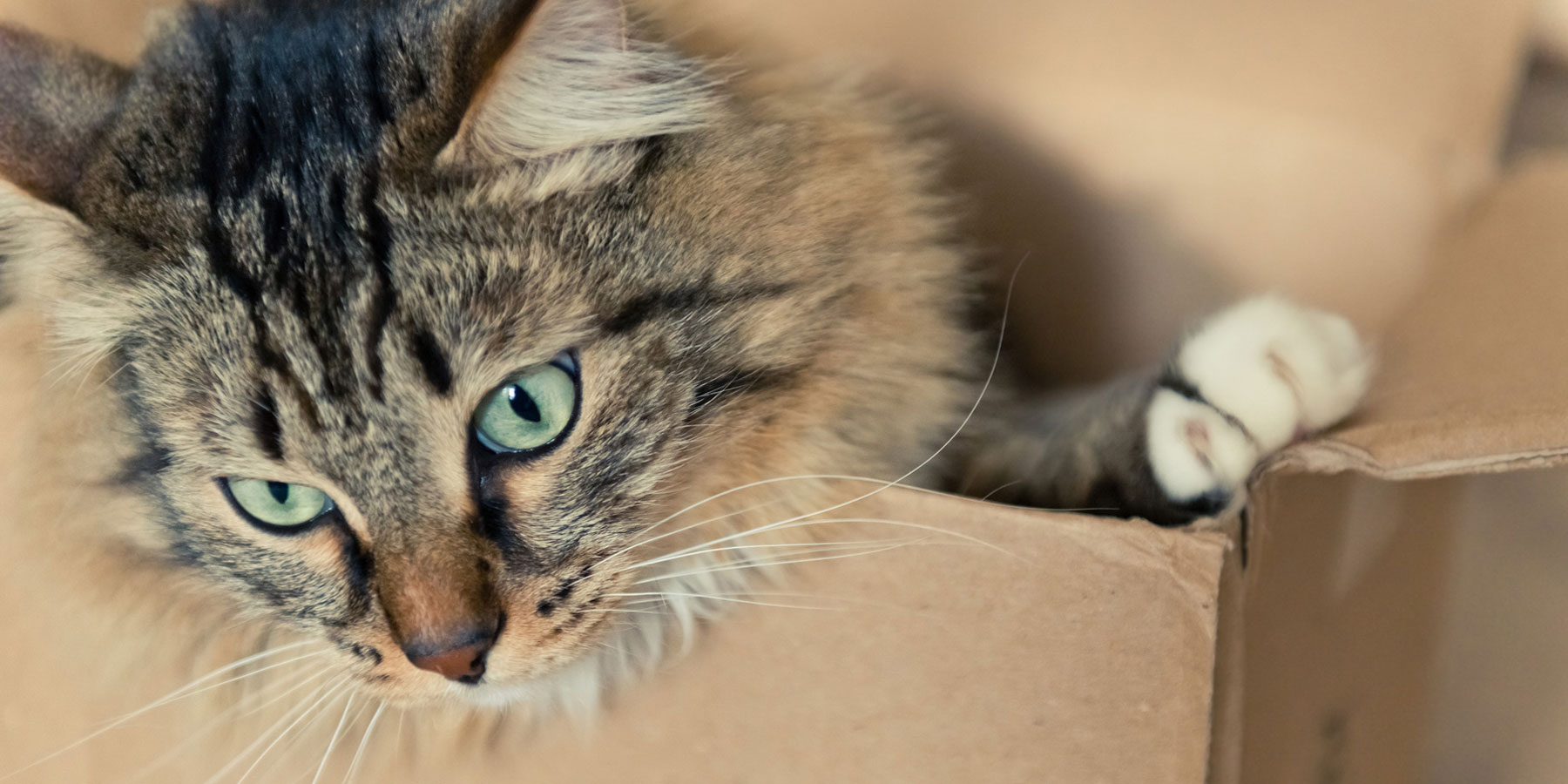 Kontakt Tierarztpraxis Ehrenbrink